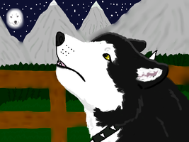 Great wolf what amI dog or wolf. by wolfgirlsurvivor