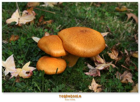 Toadstools by snippet1