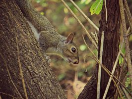 Squirrel by NathansMommy1787