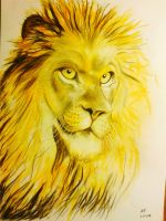 Lion by Absent-Persona