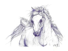 The Arabian Horse - Pen by JenHuang