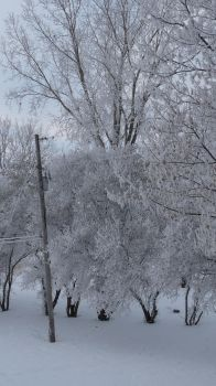 Winter Trees by GraceRene