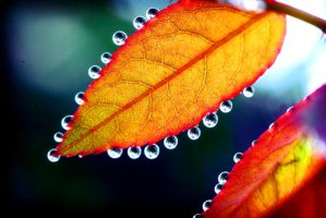 Leaf Drops by marym-sueraya
