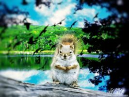the power of a Squirrel by rowlee
