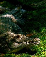 Never Smile at a Crocodile by seeing-the-dark