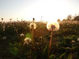 Dandylion Forest at Sundown by Ablebaker