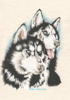 Siberian Huskies by AlyWiish