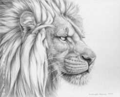 Lion's mane by sschukina
