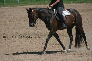 Quarter Horse Stock 106 by tragedyseen
