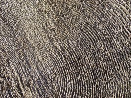 Texture - wood 2 by SanStock