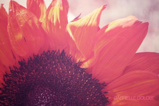 The Red Sunflower by MsGabrielle