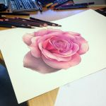 Rose study color pencil by AtomiccircuS
