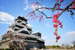 Apricot and Kumamoto castle by WindyLife