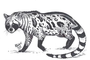 Giant Civet by HodariNundu