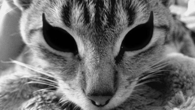 MY CAT by Browsemaster