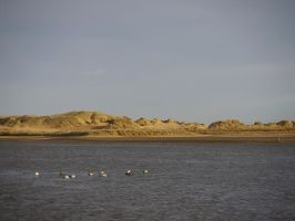 Sand dunes and eider ducks by Blue-eyed-Kelpie