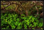 Underbrush by aFeinPhoto-com
