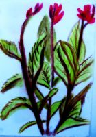 Some Plants by MWaters