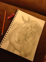 Thoroughbred by katyscribbles
