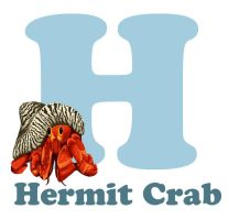 H-ermit Crab by RSImpey