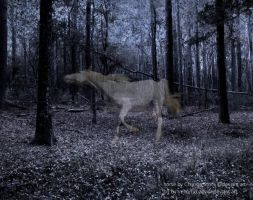 Ghost Horse by lildonkey