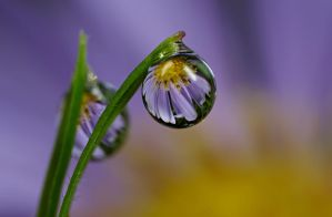 Dew Drop Refraction 1 by Alliec