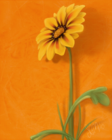 Gazania by Clouded-3D