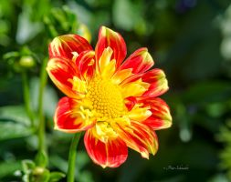 Fall flower. by Phototubby