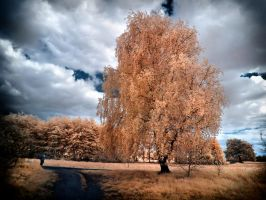 OrangeTree infrared by MichiLauke