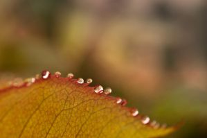 Dew drops by cADead