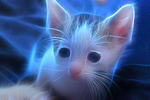 Fractal Baby Kitten2 by Cope57