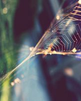 Webs of Gold by ZahrahLeona