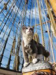 Ship Cat Ditty by angelac