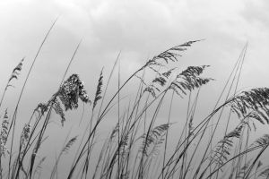 amber waves in grey by Marya2s