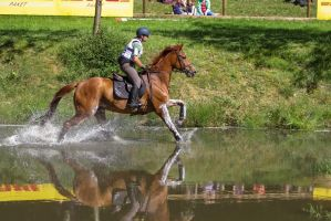 Chestnut Anglo Arabian Cross Country Stock by LuDa-Stock