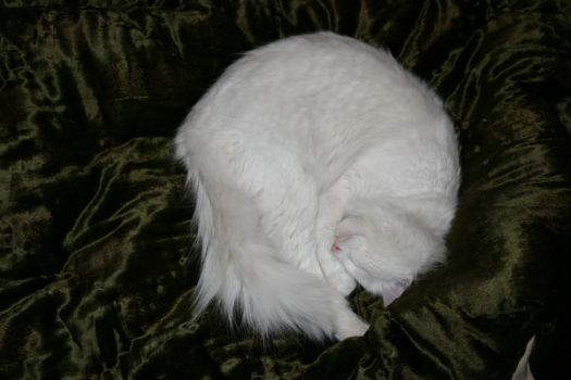 White cat ball by NaviStock