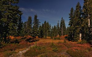 Heather Flats by IvanAndreevich