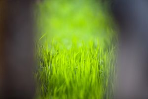 Grass by dimichael