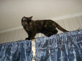 Arwen Curtain Climber by aragornsparrow