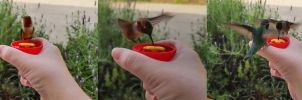 Bird in the hand by kayaksailor