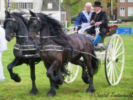 Two Friesian Carriage 5 by ChantalToutenhoofd