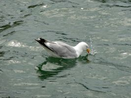 Mouette 1 by eco6org