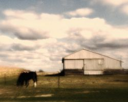 Horse and Stable by pubculture
