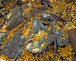 Hot Leaves in a Cold Forest by greenunderground
