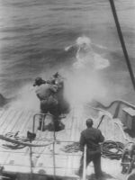 Whaling:few moments after shot by addicted2