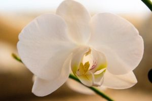 I Love Orchids II by LDFranklin