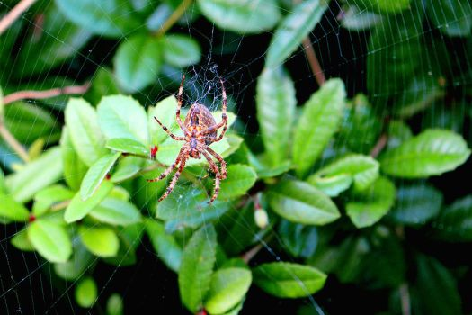 London Spider by candycotmer