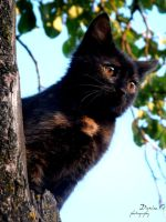 Cat :3 by Denisa66