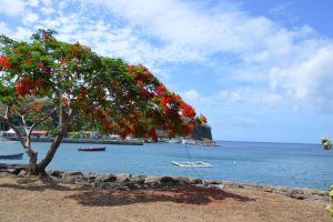 Case-Pilote bay and flamboyant tree by A1Z2E3R