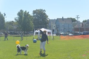 2014 Dog Festival, Treiball Session 10 by Miss-Tbones